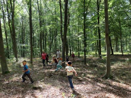 Des grands jeux en forêt