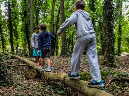 La forêt comme terrain d'aventure